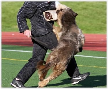 DVG dog photo